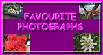 Favouorite Photographs